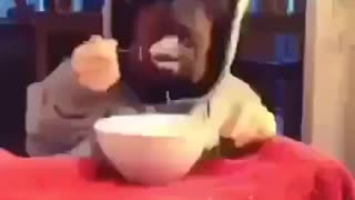 Rottweiler Eating At Table