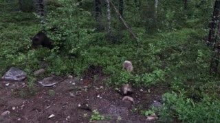 Man Chases Away Bear With a Broom - Video
