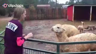 When human teased by animals
