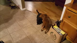 Dog and cat playing with a little surprise at the end  - Video