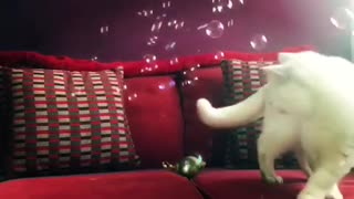 Cat meows in excitement when owner blows bubbles - Video