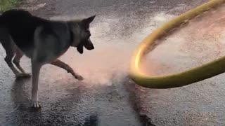 Dog enjoys water on firetruck  - Video