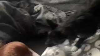 Dogs meeting new sister