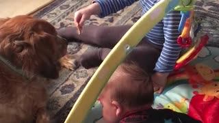 Girl and puppy  - Video