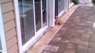 Dog Teaches Puppy How To Use Doggy Door - Video