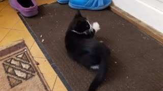 Cat playing with a sponge