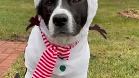 Cute doggy models adorable snowman costume