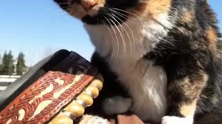 Cat on top of horse  - Video