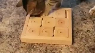 Cat solves the puzzle treat with ease