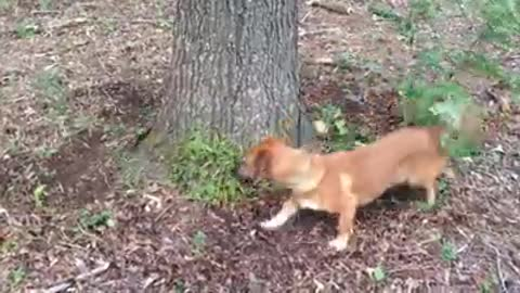 What this cute dog is trying to catch