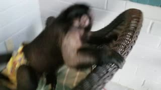 Monkey Going Crazy Having Fun!!  - Video