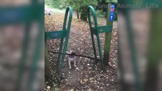 Cute Pets And Funny Animals Compilation --