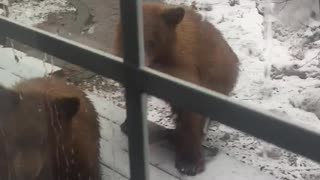 Curious Cubs - Video