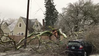Storm Causes Trees to Fall on Home in Portland - Video