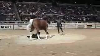 FUNNIEST HORSE ACT EVER! - Video