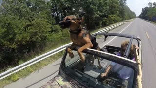Dog Takes A Car Ride - Video