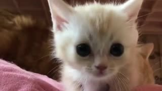 New home kittie and her Mom shower her - Video