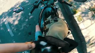Motorcyclist Rescues Kitten From Middle of Road