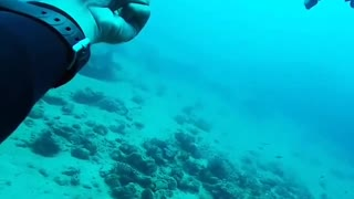 Diver Perform Wonderful Fishes Saves