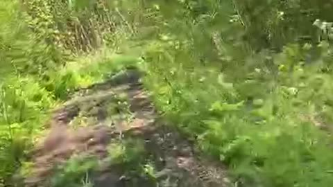 WALKING FOREST ON A SCOOTER