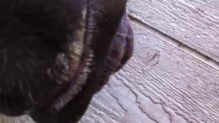 Horse Curls Tongue And Blows Through It - Video