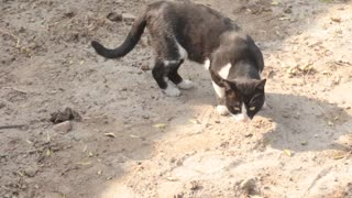 cat smelling to search some thing to eat  - Video