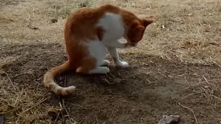 The cat is clean - Video