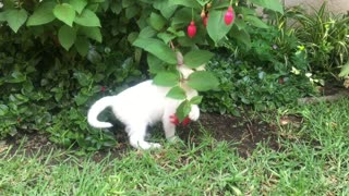 a white kitten playing with flowering plant