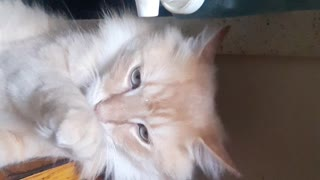 Cat helping himself  - Video