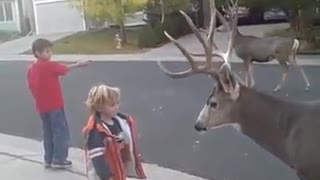 Amazing video of a  dangerous  wild  deer  and  courage little girl - Video
