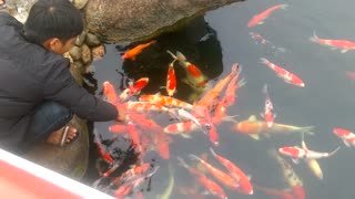 lake beautiful fish  - Video