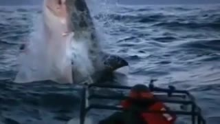 check how great spectacular moves done by dolphins in water