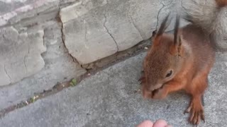 Feeding Cute Squirrel in the Park