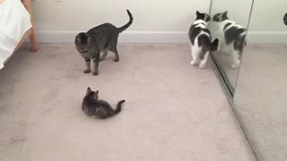 Little cat and her Mom playing in the house