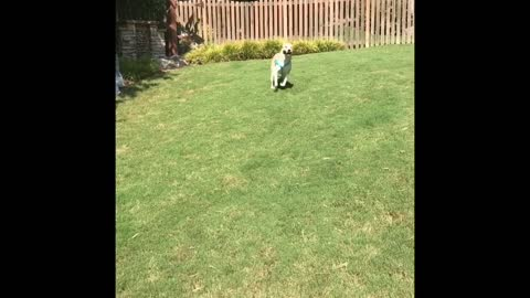 Puppy Zoomies with a Koozie