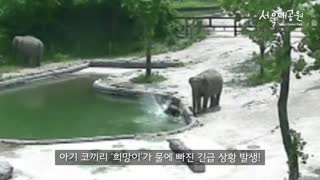 Elephant family saves drowning calf - Video