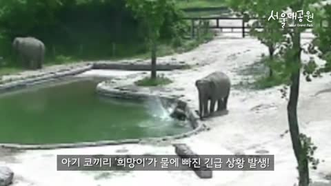 Elephant family saves drowning calf