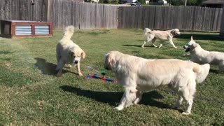 Dogs know exactly how to beat Texas heat - Video