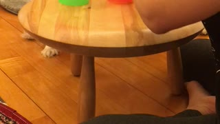 Puppy's three cups of magic - Video