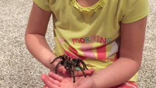 Young Girl Holds Tarantula - Video