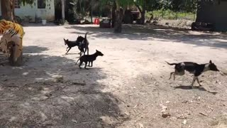 watch what happens to these poor dogs while they sleep 👀😲😲