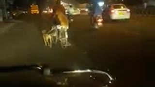 Man in India walks both his dogs to work on bicycle