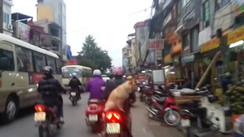 "The dog out for a ride on a Motobycle in the sidecar. It does not Equipped with ""Doggles"""