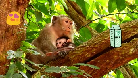 Monkey don't her baby monkey disturb by other monkey she climb on the big tree