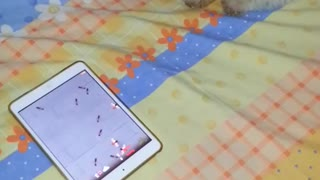 Puppy playing ipad