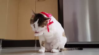 funny video with a cat !!!