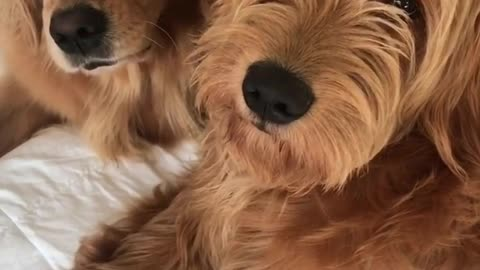Doggy best friends enjoy perfect time together