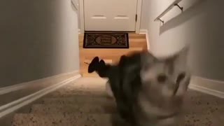 Two Cute Kittens Making a Race About comes up 1st - Video