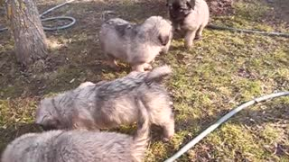 small dogs friends - Video
