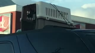Driver Keeps Dog in Cage on Roof of Car - Video
